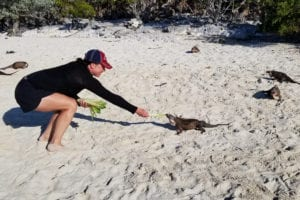 Iguanas at Allens Cay